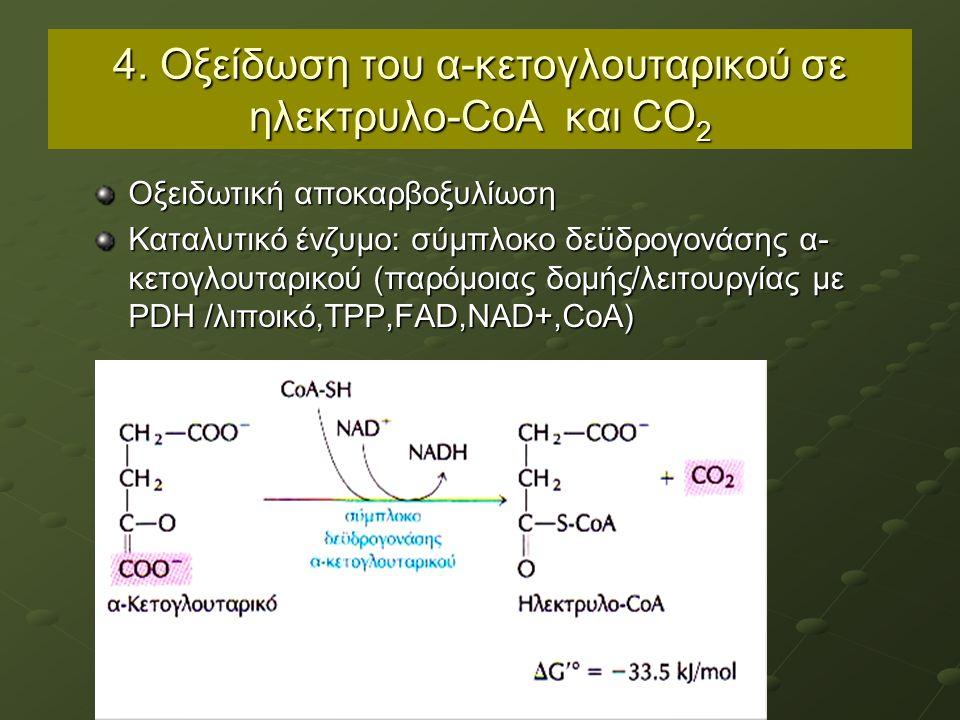 4. Οξείδωση του α-κετογλουταρικού σε ηλεκτρυλο-CoA και CO 2 Οξειδωτική αποκαρβοξυλίωση Καταλυτικό ένζυμο: σύμπλοκο δεϋδρογονάσης α- κετογλουταρικού (π