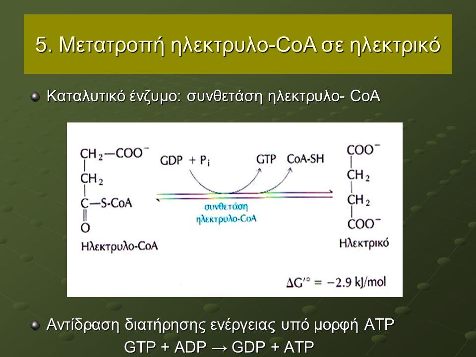 5. Μετατροπή ηλεκτρυλο-CoA σε ηλεκτρικό Καταλυτικό ένζυμο: συνθετάση ηλεκτρυλο- CoΑ Αντίδραση διατήρησης ενέργειας υπό μορφή ATP GTP + ADP → GDP + ATP