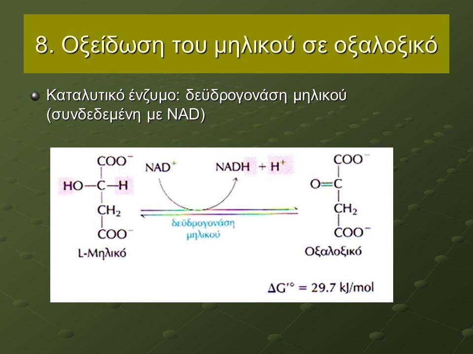 8. Οξείδωση του μηλικού σε οξαλοξικό Καταλυτικό ένζυμο: δεϋδρογονάση μηλικού (συνδεδεμένη με NAD)