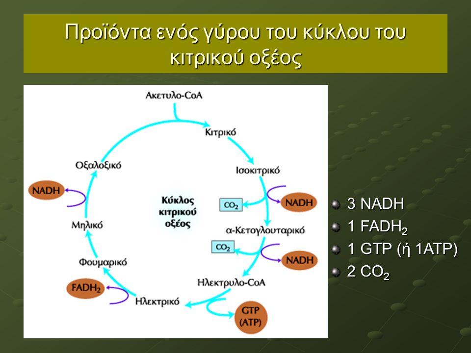 Προϊόντα ενός γύρου του κύκλου του κιτρικού οξέος 3 NADH 1 FADH 2 1 GTP (ή 1ATP) 2 CO 2