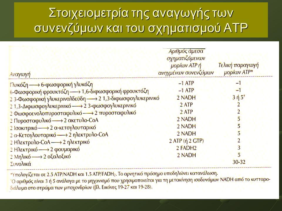 Στοιχειομετρία της αναγωγής των συνενζύμων και του σχηματισμού ΑΤΡ