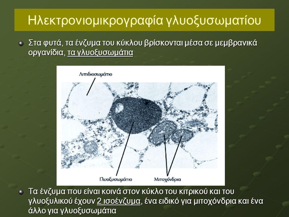 Ηλεκτρονιομικρογραφία γλυοξυσωματίου Στα φυτά, τα ένζυμα του κύκλου βρίσκονται μέσα σε μεμβρανικά οργανίδια, τα γλυοξυσωμάτια Τα ένζυμα που είναι κοινά στον κύκλο του κιτρικού και του γλυοξυλικού έχουν 2 ισοένζυμα, ένα ειδικό για μιτοχόνδρια και ένα άλλο για γλυοξυσωμάτια