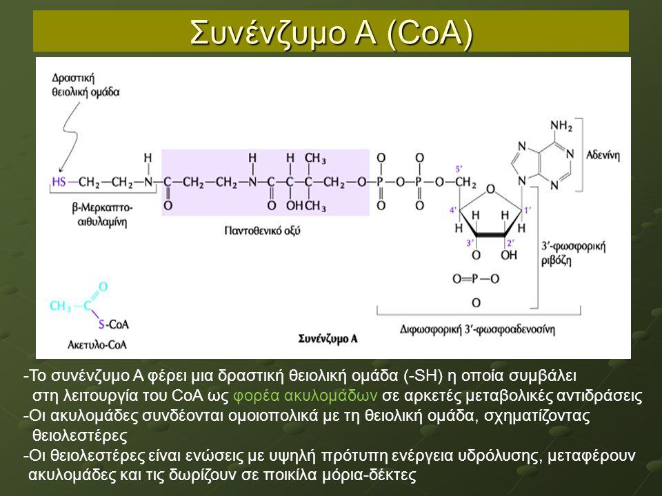 Συνένζυμο Α (CoA) -Το συνένζυμο Α φέρει μια δραστική θειολική ομάδα (-SΗ) η οποία συμβάλει στη λειτουργία του CoA ως φορέα ακυλομάδων σε αρκετές μεταβολικές αντιδράσεις -Οι ακυλομάδες συνδέονται ομοιοπολικά με τη θειολική ομάδα, σχηματίζοντας θειολεστέρες -Οι θειολεστέρες είναι ενώσεις με υψηλή πρότυπη ενέργεια υδρόλυσης, μεταφέρουν ακυλομάδες και τις δωρίζουν σε ποικίλα μόρια-δέκτες