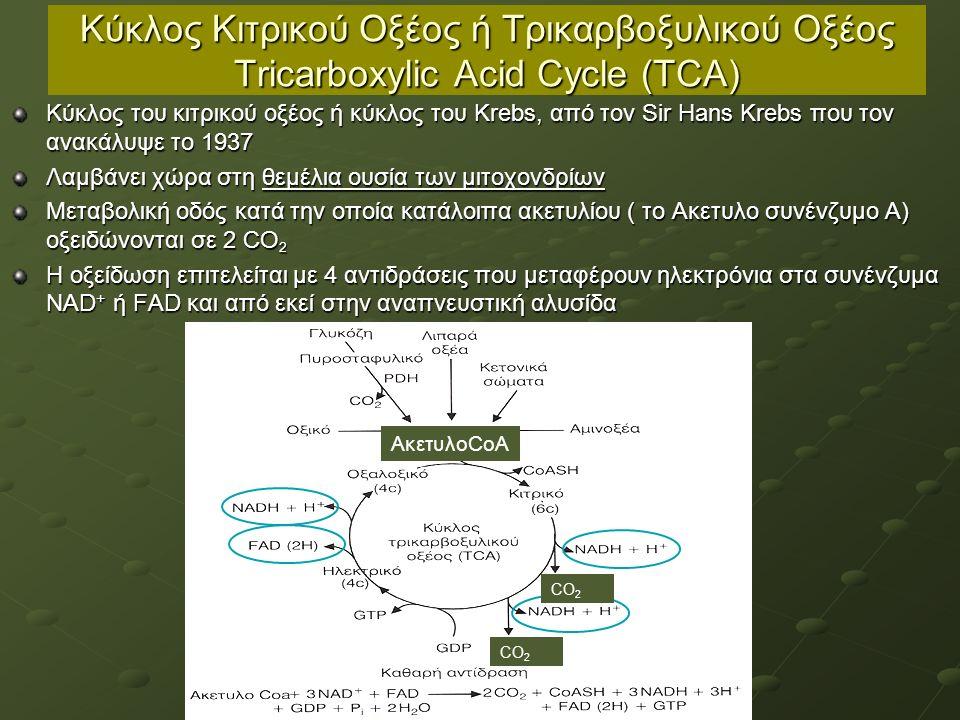 Κύκλος Κιτρικού Οξέος ή Τρικαρβοξυλικού Οξέος Tricarboxylic Acid Cycle (TCA) Κύκλος του κιτρικού οξέος ή κύκλος του Krebs, από τον Sir Hans Krebs που τον ανακάλυψε το 1937 Λαμβάνει χώρα στη θεμέλια ουσία των μιτοχονδρίων Μεταβολική οδός κατά την οποία κατάλοιπα ακετυλίου ( το Ακετυλο συνένζυμο Α) οξειδώνονται σε 2 CO 2 Η οξείδωση επιτελείται με 4 αντιδράσεις που μεταφέρουν ηλεκτρόνια στα συνένζυμα ΝΑD + ή FAD και από εκεί στην αναπνευστική αλυσίδα ΑκετυλοCoA CO 2