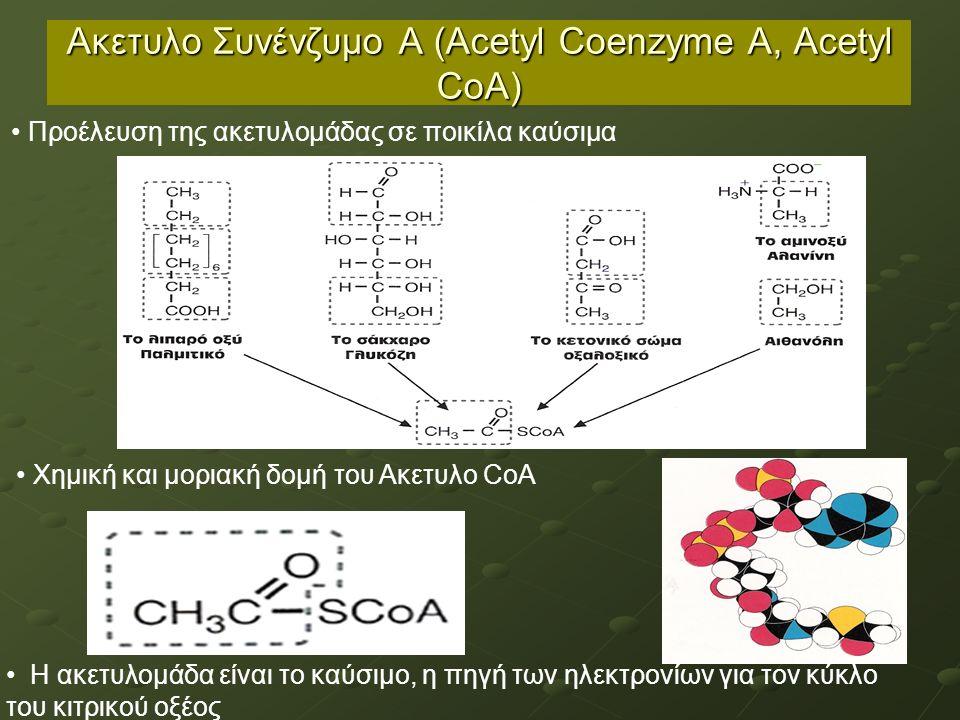 Ακετυλο Συνένζυμο Α (Acetyl Coenzyme A, Acetyl CoA) Η ακετυλομάδα είναι το καύσιμο, η πηγή των ηλεκτρονίων για τον κύκλο του κιτρικού οξέος Προέλευση της ακετυλομάδας σε ποικίλα καύσιμα Χημική και μοριακή δομή του Ακετυλο CoA