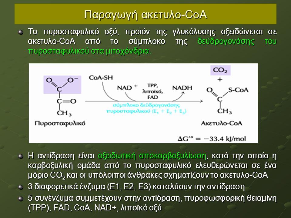 Παραγωγή ακετυλο-CoA Το πυροσταφυλικό οξύ, προϊόν της γλυκόλυσης οξειδώνεται σε ακετυλο-CoA από το σύμπλοκο της δεϋδρογονάσης του πυροσταφυλικού στα μιτοχόνδρια.
