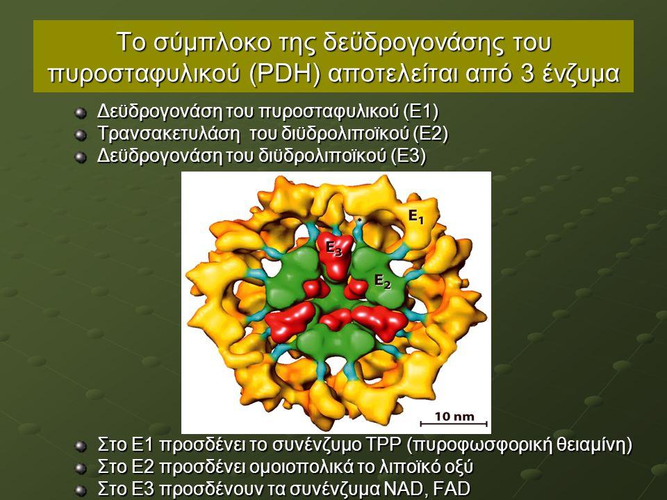 Το σύμπλοκο της δεϋδρογονάσης του πυροσταφυλικού (ΡDΗ) αποτελείται από 3 ένζυμα Δεϋδρογονάση του πυροσταφυλικού (Ε1) Τρανσακετυλάση του διϋδρολιποϊκού (Ε2) Δεϋδρογονάση του διϋδρολιποϊκού (Ε3) Στο Ε1 προσδένει το συνένζυμο ΤΡΡ (πυροφωσφορική θειαμίνη) Στο Ε2 προσδένει ομοιοπολικά το λιποϊκό οξύ Στο Ε3 προσδένουν τα συνένζυμα NAD, FAD
