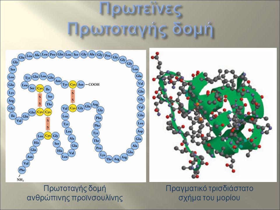 Πρωτοταγής δομή ανθρώπινης προϊνσουλίνης Πραγματικό τρισδιάστατο σχήμα του μορίου