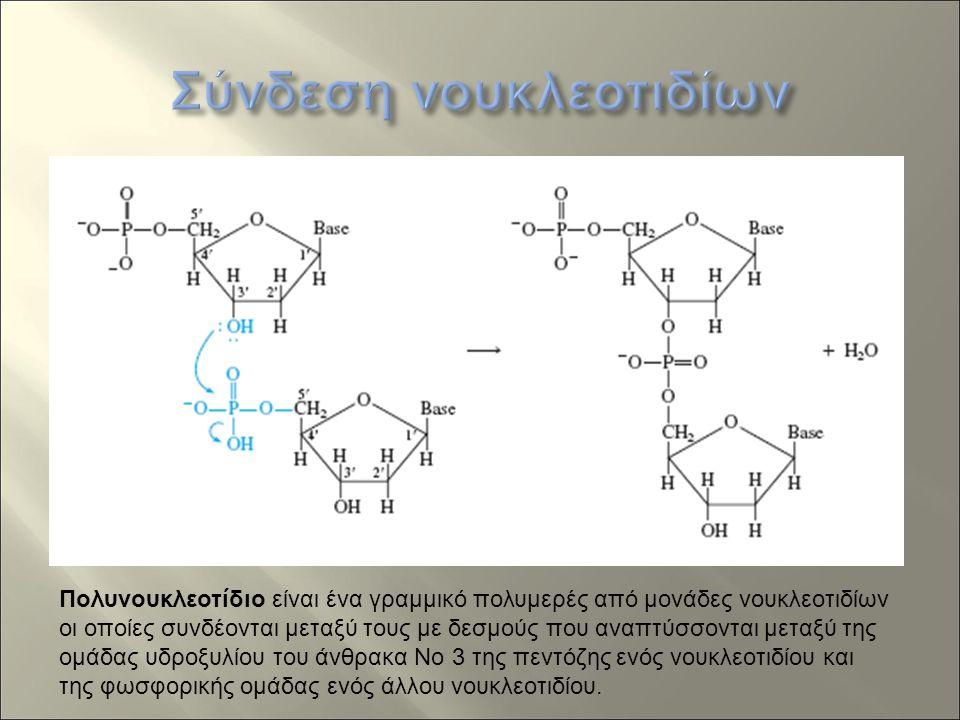 Πολυνουκλεοτίδιο είναι ένα γραμμικό πολυμερές από μονάδες νουκλεοτιδίων οι οποίες συνδέονται μεταξύ τους με δεσμούς που αναπτύσσονται μεταξύ της ομάδας υδροξυλίου του άνθρακα Νο 3 της πεντόζης ενός νουκλεοτιδίου και της φωσφορικής ομάδας ενός άλλου νουκλεοτιδίου.