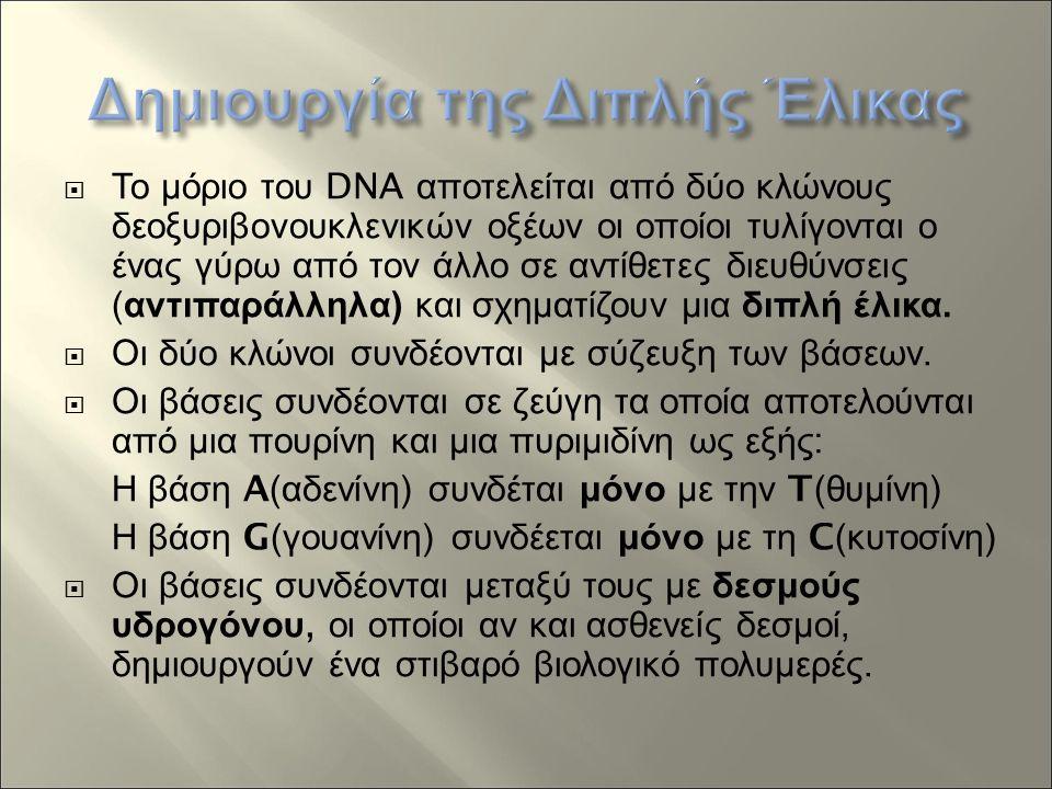  Το μόριο του DNA αποτελείται από δύο κλώνους δεοξυριβονουκλενικών οξέων οι οποίοι τυλίγονται ο ένας γύρω από τον άλλο σε αντίθετες διευθύνσεις ( αντιπαράλληλα ) και σχηματίζουν μια διπλή έλικα.