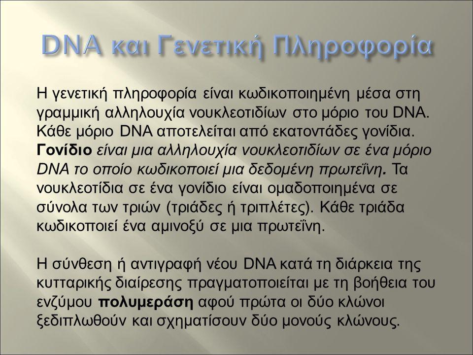 Η γενετική πληροφορία είναι κωδικοποιημένη μέσα στη γραμμική αλληλουχία νουκλεοτιδίων στο μόριο του DNA.