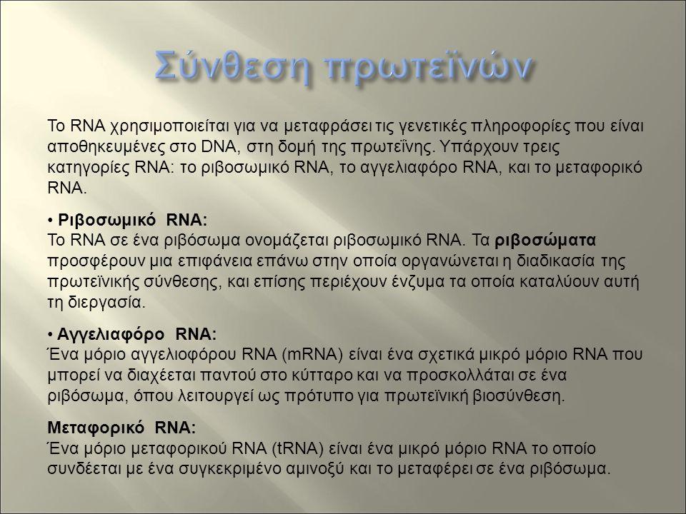 Το RNA χρησιμοποιείται για να μεταφράσει τις γενετικές πληροφορίες που είναι αποθηκευμένες στο DNA, στη δομή της πρωτεΐνης.