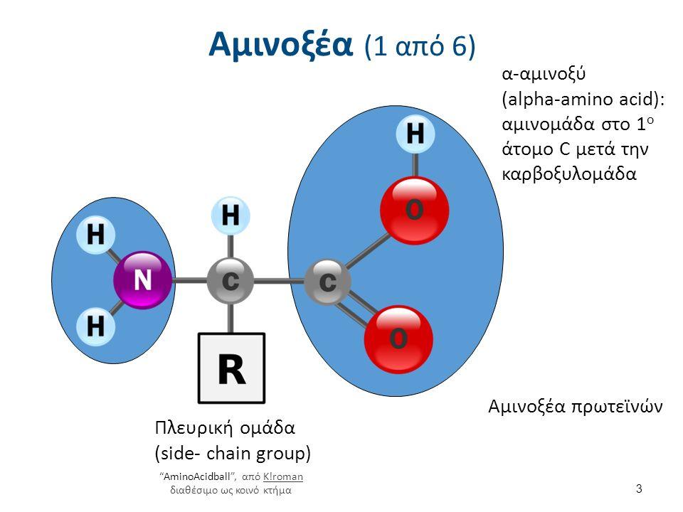 Αμινοξέα (1 από 6) 3 α-αμινοξύ (alpha-amino acid): αμινομάδα στο 1 ο άτομο C μετά την καρβοξυλομάδα Πλευρική ομάδα (side- chain group) Αμινοξέα πρωτεϊνών AminoAcidball , από K!roman διαθέσιμο ως κοινό κτήμαK!roman