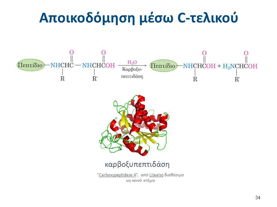 Αποικοδόμηση μέσω C-τελικού 34 καρβοξυπεπτιδάση Carboxypeptidase A , από Lijealso διαθέσιμο ως κοινό κτήμαCarboxypeptidase ALijealso