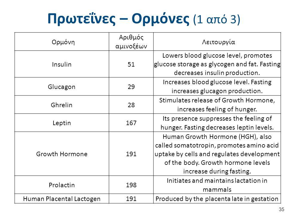Πρωτεΐνες – Ορμόνες (1 από 3) 35 Ορμόνη Αριθμός αμινοξέων Λειτουργία Insulin51 Lowers blood glucose level, promotes glucose storage as glycogen and fat.