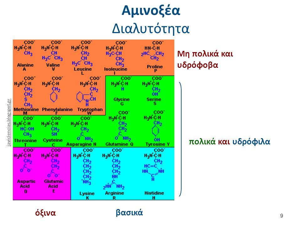 Αμινοξέα Οξεοβασική συμπεριφορά (1 από 2) 10 pH > pKα της καρβοξυλικής ομάδας (pKα ~ 2,2) → -COO - pH < pKα της αμινομάδας (pKα ~ 9,4) → -ΝΗ 3 + 2,2 < pH < 9,4 → διπολικό ιόν ή εσωτερικό άλας (zwitterion) pH < 2,2 → -ΝΗ 3 + pH > 9,4 → -COO - Άρα…