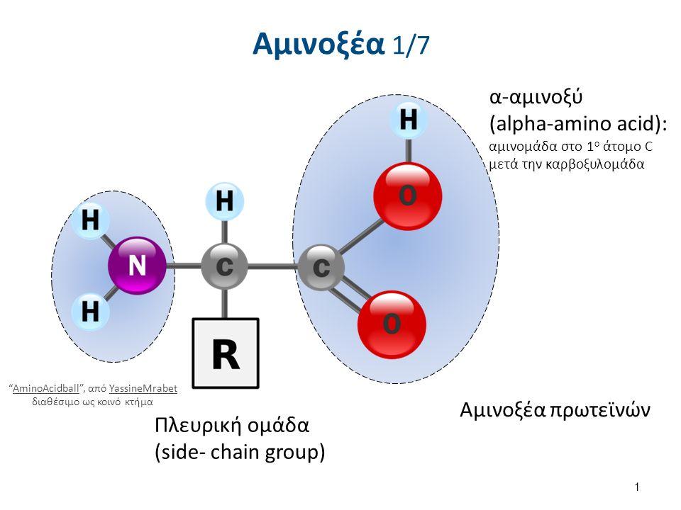 """Αμινοξέα 1/7 α-αμινοξύ (alpha-amino acid): αμινομάδα στο 1 ο άτομο C μετά την καρβοξυλομάδα Πλευρική ομάδα (side- chain group) Αμινοξέα πρωτεϊνών 1 """"A"""