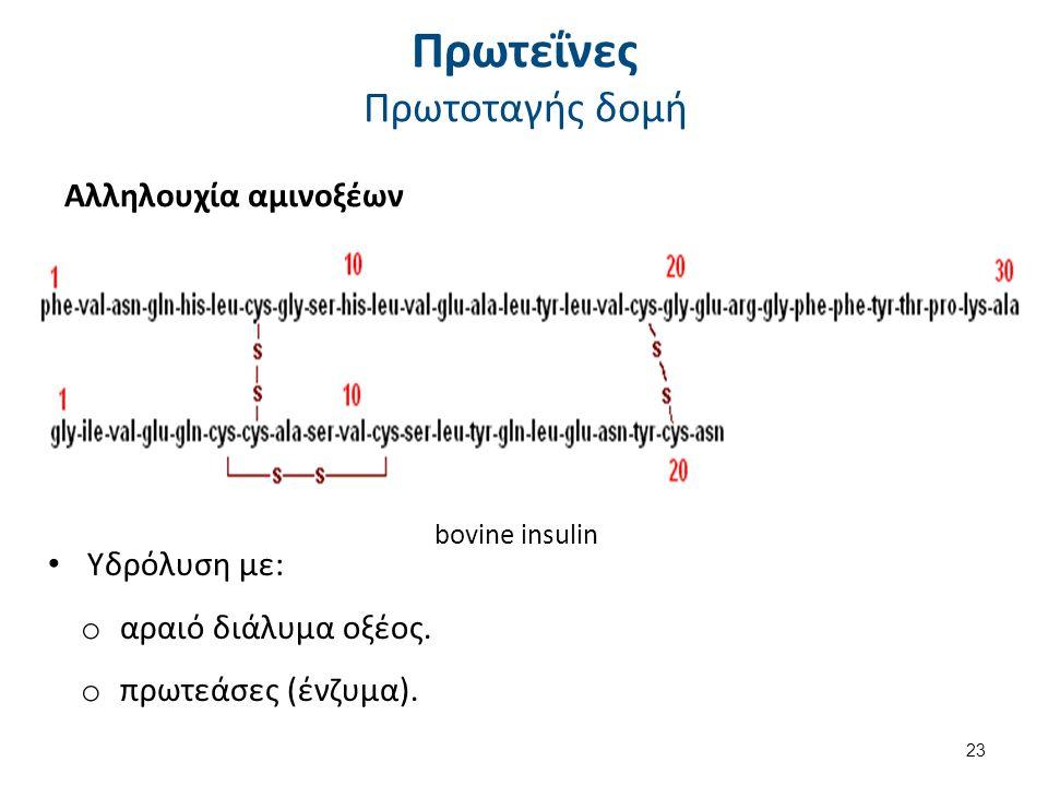 Πρωτεΐνες Πρωτοταγής δομή Αλληλουχία αμινοξέων bovine insulin Υδρόλυση με: o αραιό διάλυμα οξέος. o πρωτεάσες (ένζυμα). 23