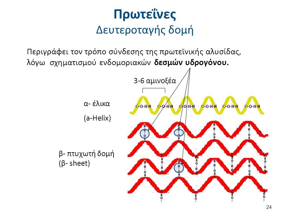 Πρωτεΐνες Δευτεροταγής δομή Περιγράφει τον τρόπο σύνδεσης της πρωτεϊνικής αλυσίδας, λόγω σχηματισμού ενδομοριακών δεσμών υδρογόνου. α- έλικα (a-Helix)