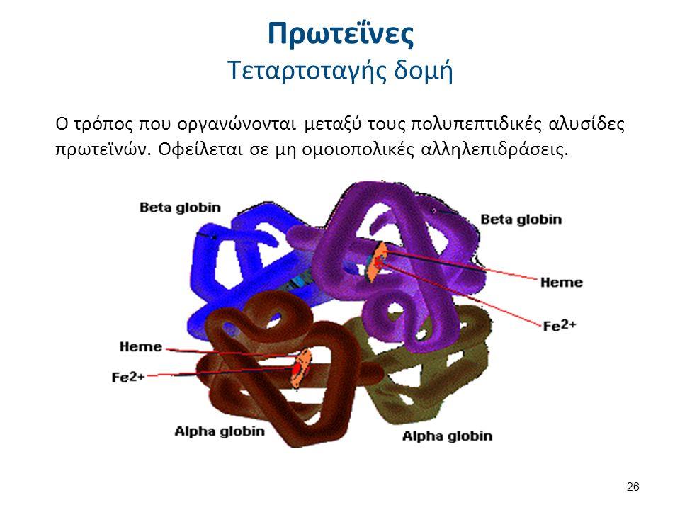 Πρωτεΐνες Τεταρτοταγής δομή Ο τρόπος που οργανώνονται μεταξύ τους πολυπεπτιδικές αλυσίδες πρωτεϊνών. Οφείλεται σε μη ομοιοπολικές αλληλεπιδράσεις. 26