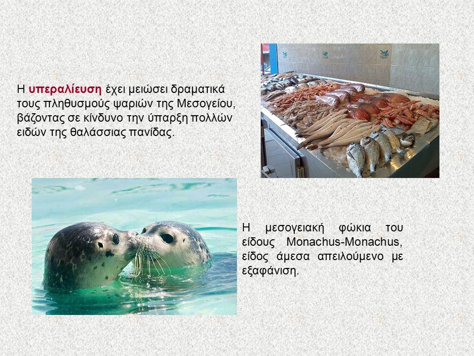 Η υπεραλίευση έχει μειώσει δραματικά τους πληθυσμούς ψαριών της Μεσογείου, βάζοντας σε κίνδυνο την ύπαρξη πολλών ειδών της θαλάσσιας πανίδας.