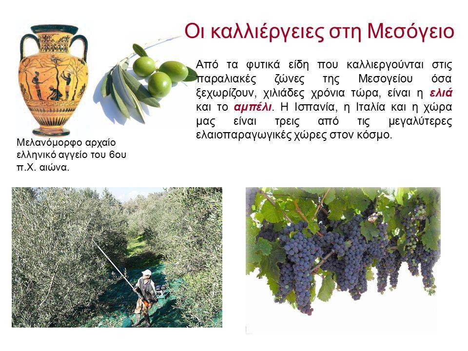 Από τα φυτικά είδη που καλλιεργούνται στις παραλιακές ζώνες της Μεσογείου όσα ξεχωρίζουν, χιλιάδες χρόνια τώρα, είναι η ελιά και το αμπέλι.