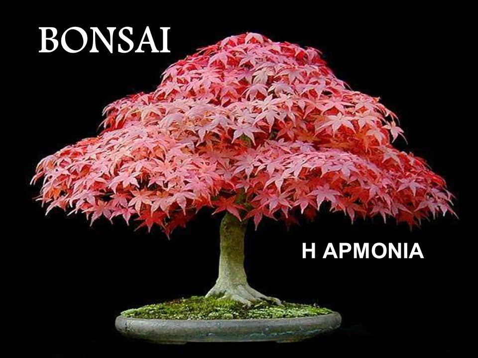BONSAI Η ΑΡΜΟΝΙΑ