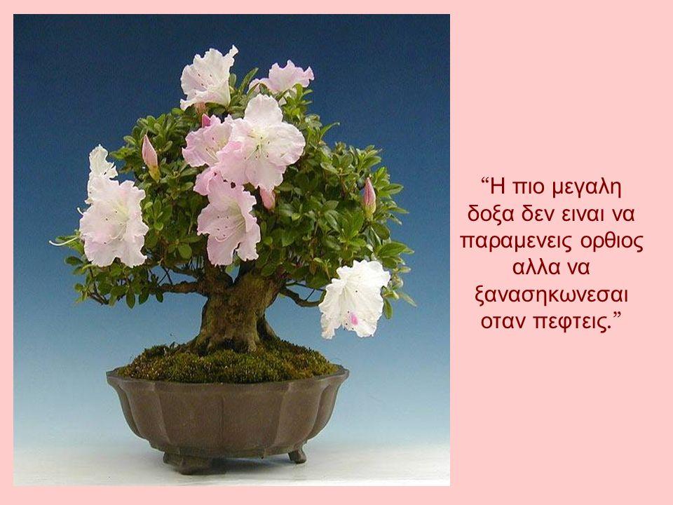 Υπαρχουν ανθρωποι που κλενε οταν μαθουν οτι τα τριανταφυλλα εχουν αγκαθια και αλλοι χαιρονται οταν μαθουν οτι τα αγκαθια εχουν τριανταφυλλα.