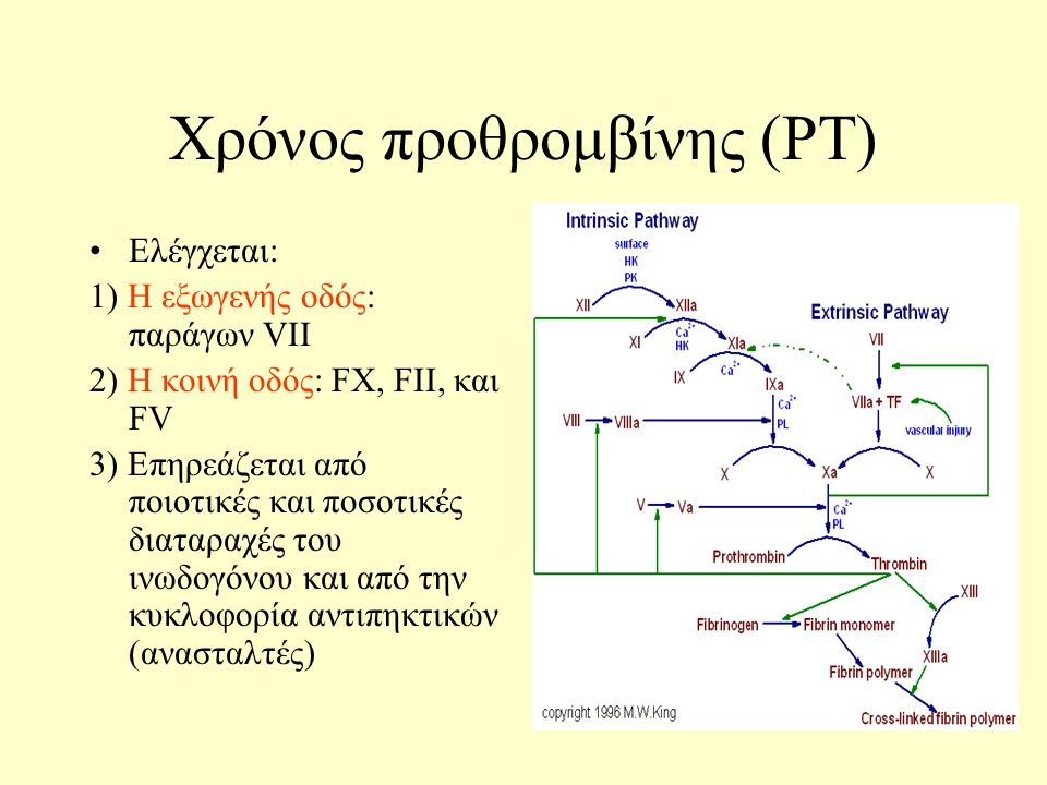 Χρόνος προθρομβίνης (PT) Ελέγχεται: 1) Η εξωγενής οδός: παράγων VII 2) Η κοινή οδός: FX, FII, και FV 3) Επηρεάζεται από ποιοτικές και ποσοτικές διαταραχές του ινωδογόνου και από την κυκλοφορία αντιπηκτικών (ανασταλτές)