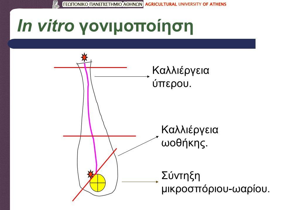 Τύποι καλλιέργειας επιλογής (β) Κάλλος Υπόστρωμα επιλογής Διασταυρωτή ανθεκτικότητα