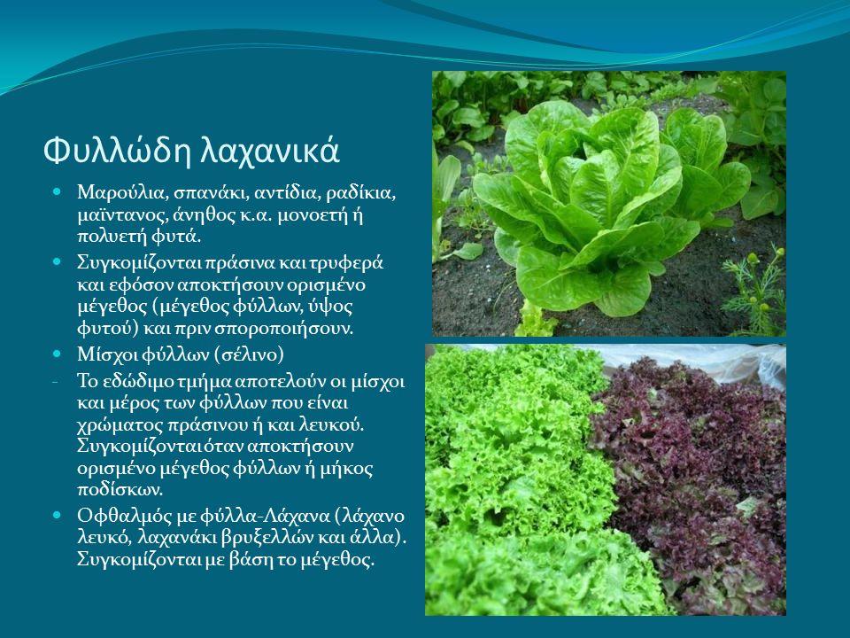 Φυλλώδη λαχανικά Μαρούλια, σπανάκι, αντίδια, ραδίκια, μαϊντανος, άνηθος κ.α.