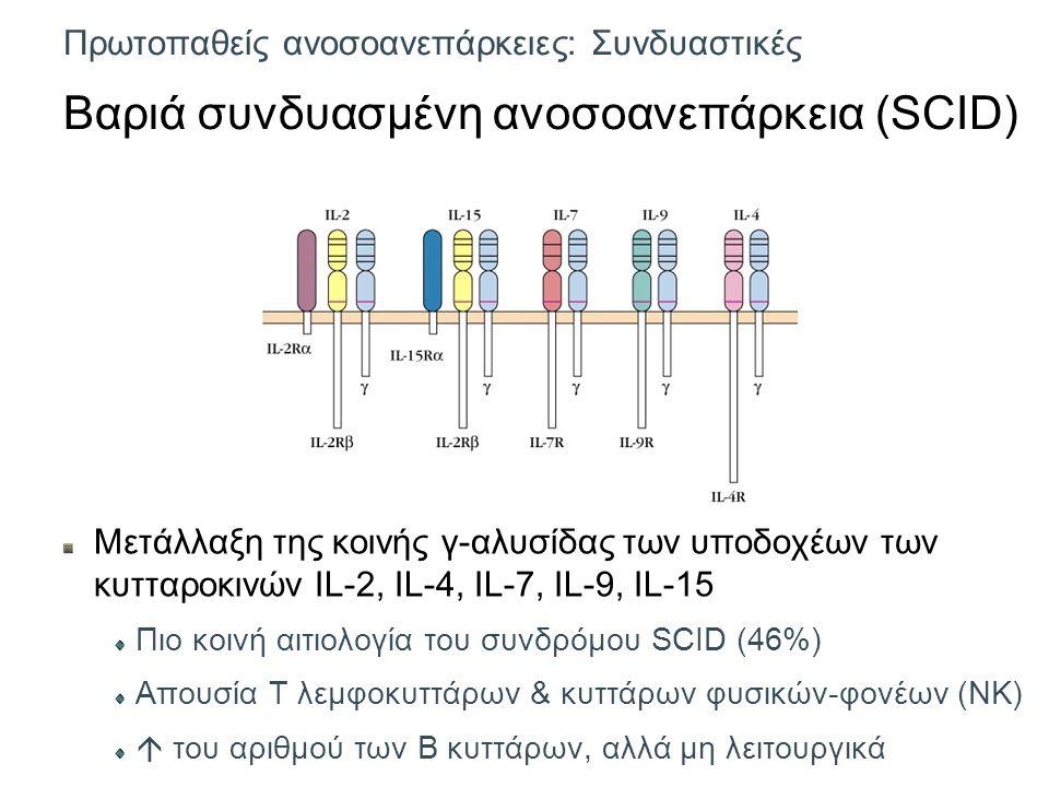 Πρωτοπαθείς ανοσοανεπάρκειες: Συνδυαστικές Βαριά συνδυασμένη ανοσοανεπάρκεια (SCID) Μετάλλαξη της κοινής γ-αλυσίδας των υποδοχέων των κυτταροκινών IL-2, IL-4, IL-7, IL-9, IL-15 Πιο κοινή αιτιολογία του συνδρόμου SCID (46%) Απουσία Τ λεμφοκυττάρων & κυττάρων φυσικών-φονέων (NK)  του αριθμού των Β κυττάρων, αλλά μη λειτουργικά