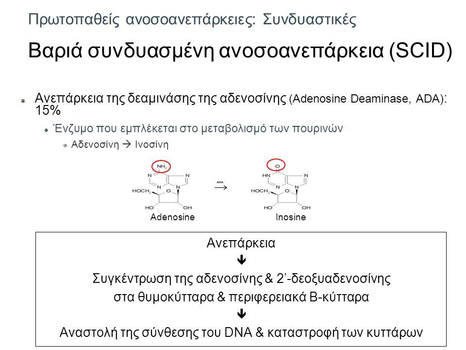 Πρωτοπαθείς ανοσοανεπάρκειες: Συνδυαστικές Βαριά συνδυασμένη ανοσοανεπάρκεια (SCID) Ανεπάρκεια της δεαμινάσης της αδενοσίνης (Adenosine Deaminase, ADA) : 15% Ένζυμο που εμπλέκεται στο μεταβολισμό των πουρινών  Αδενοσίνη  Ινοσίνη Ανεπάρκεια  Συγκέντρωση της αδενοσίνης & 2'-δεοξυαδενοσίνης στα θυμοκύτταρα & περιφερειακά Β-κύτταρα  Αναστολή της σύνθεσης του DNA & καταστροφή των κυττάρων AdenosineInosine