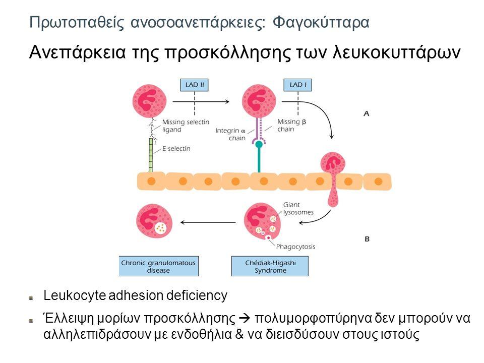 Πρωτοπαθείς ανοσοανεπάρκειες: Φαγοκύτταρα Ανεπάρκεια της προσκόλλησης των λευκοκυττάρων Leukocyte adhesion deficiency Έλλειψη μορίων προσκόλλησης  πολυμορφοπύρηνα δεν μπορούν να αλληλεπιδράσουν με ενδοθήλια & να διεισδύσουν στους ιστούς