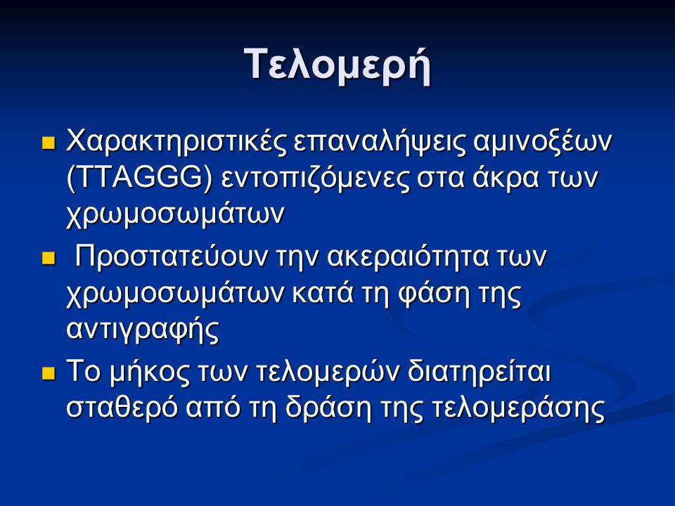Τελομερή Χαρακτηριστικές επαναλήψεις αμινοξέων (TTAGGG) εντοπιζόμενες στα άκρα των χρωμοσωμάτων Χαρακτηριστικές επαναλήψεις αμινοξέων (TTAGGG) εντοπιζόμενες στα άκρα των χρωμοσωμάτων Προστατεύουν την ακεραιότητα των χρωμοσωμάτων κατά τη φάση της αντιγραφής Προστατεύουν την ακεραιότητα των χρωμοσωμάτων κατά τη φάση της αντιγραφής Το μήκος των τελομερών διατηρείται σταθερό από τη δράση της τελομεράσης Το μήκος των τελομερών διατηρείται σταθερό από τη δράση της τελομεράσης