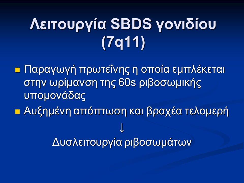Λειτουργία SBDS γονιδίου (7q11) Παραγωγή πρωτεΐνης η οποία εμπλέκεται στην ωρίμανση της 60s ριβοσωμικής υπομονάδας Παραγωγή πρωτεΐνης η οποία εμπλέκεται στην ωρίμανση της 60s ριβοσωμικής υπομονάδας Αυξημένη απόπτωση και βραχέα τελομερή Αυξημένη απόπτωση και βραχέα τελομερή↓ Δυσλειτουργία ριβοσωμάτων