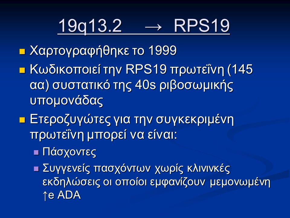 19q13.2 →RPS19 Χαρτογραφήθηκε το 1999 Χαρτογραφήθηκε το 1999 Κωδικοποιεί την RPS19 πρωτεΐνη (145 αα) συστατικό της 40s ριβοσωμικής υπομονάδας Κωδικοποιεί την RPS19 πρωτεΐνη (145 αα) συστατικό της 40s ριβοσωμικής υπομονάδας Ετεροζυγώτες για την συγκεκριμένη πρωτεΐνη μπορεί να είναι: Ετεροζυγώτες για την συγκεκριμένη πρωτεΐνη μπορεί να είναι: Πάσχοντες Πάσχοντες Συγγενείς πασχόντων χωρίς κλινινκές εκδηλώσεις οι οποίοι εμφανίζουν μεμονωμένη ↑e ADA Συγγενείς πασχόντων χωρίς κλινινκές εκδηλώσεις οι οποίοι εμφανίζουν μεμονωμένη ↑e ADA