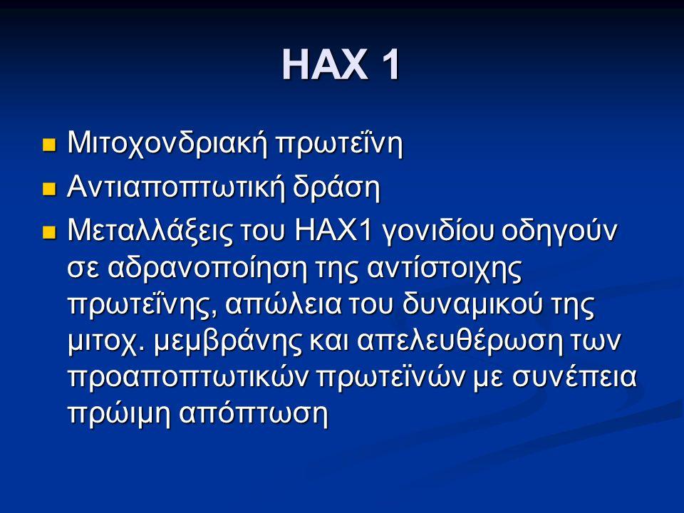 HAX 1 Μιτοχονδριακή πρωτεΐνη Μιτοχονδριακή πρωτεΐνη Αντιαποπτωτική δράση Αντιαποπτωτική δράση Μεταλλάξεις του HAX1 γονιδίου οδηγούν σε αδρανοποίηση της αντίστοιχης πρωτεΐνης, απώλεια του δυναμικού της μιτοχ.