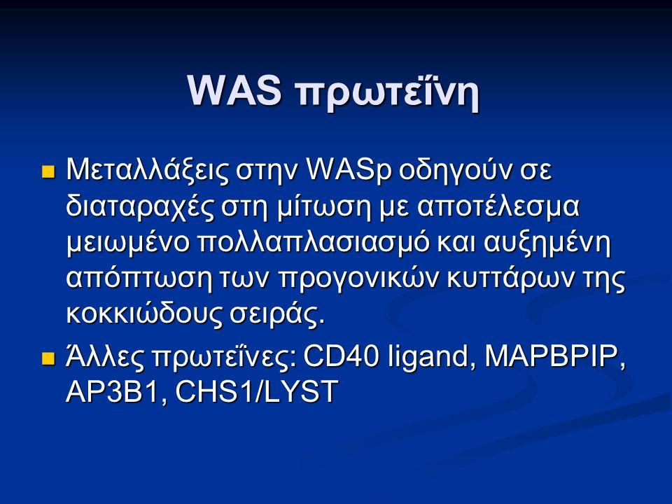 WAS πρωτεΐνη Μεταλλάξεις στην WASp οδηγούν σε διαταραχές στη μίτωση με αποτέλεσμα μειωμένο πολλαπλασιασμό και αυξημένη απόπτωση των προγονικών κυττάρων της κοκκιώδους σειράς.