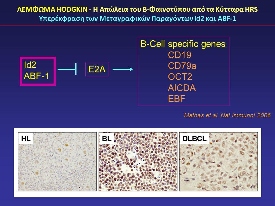 ΛΕΜΦΩΜΑ HODGKIN - Η Απώλεια του Β-Φαινοτύπου από τα Κύτταρα HRS Υπερέκφραση των Μεταγραφικών Παραγόντων Id2 και ABF-1 Id2 ABF-1 E2A B-Cell specific genes CD19 CD79a OCT2 AICDA EBF Mathas et al, Nat Immunol 2006