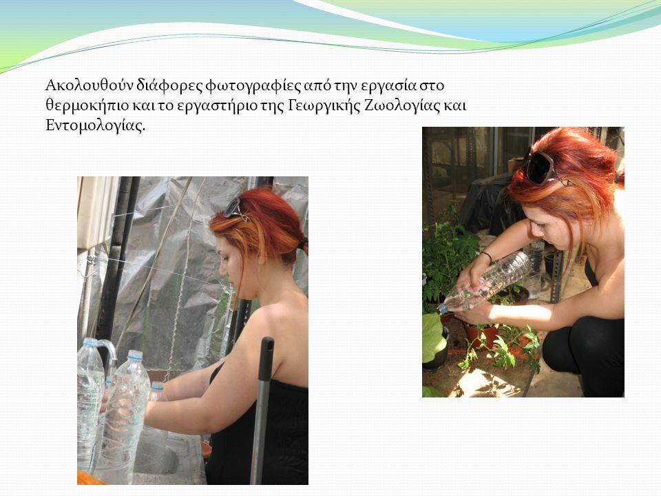Ακολουθούν διάφορες φωτογραφίες από την εργασία στο θερμοκήπιο και το εργαστήριο της Γεωργικής Ζωολογίας και Εντομολογίας.