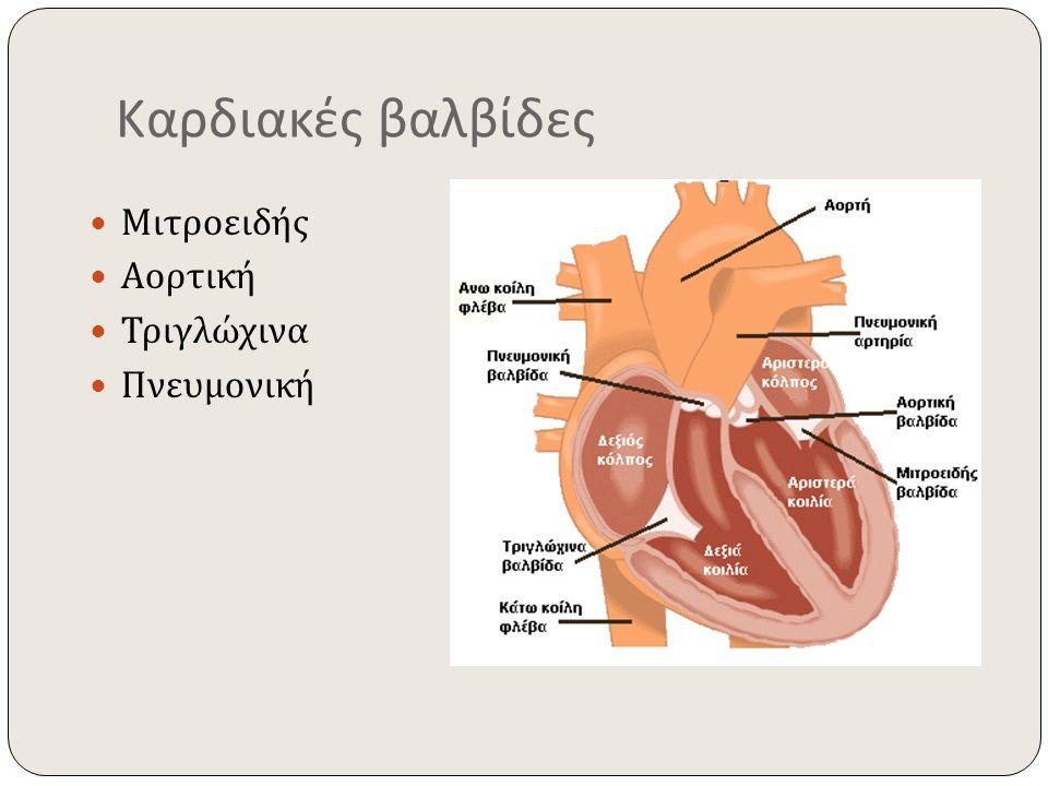 Καρδιακές βαλβίδες Μιτροειδής Αορτική Τριγλώχινα Πνευμονική