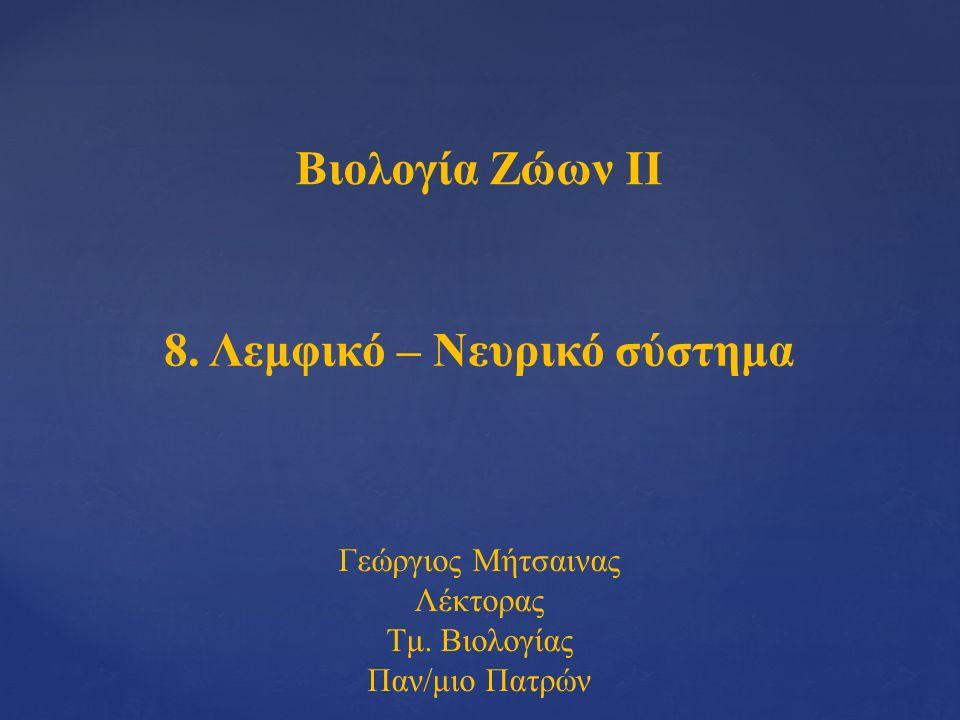 Βιολογία Ζώων ΙΙ 8. Λεμφικό – Νευρικό σύστημα Γεώργιος Μήτσαινας Λέκτορας Τμ. Βιολογίας Παν/μιο Πατρών