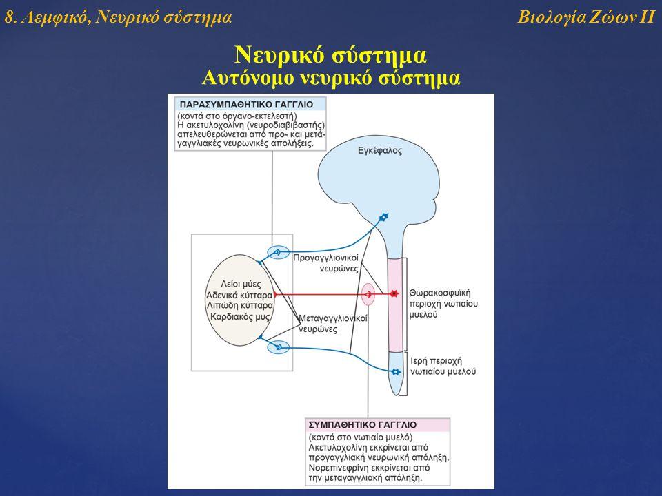 Νευρικό σύστημα Αυτόνομο νευρικό σύστημα Βιολογία Ζώων ΙΙ8. Λεμφικό, Νευρικό σύστημα
