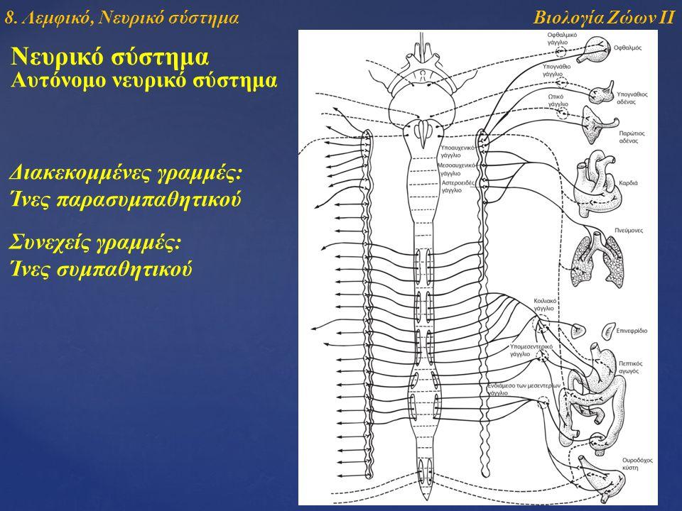 Νευρικό σύστημα Αυτόνομο νευρικό σύστημα Διακεκομμένες γραμμές: Ίνες παρασυμπαθητικού Συνεχείς γραμμές: Ίνες συμπαθητικού Βιολογία Ζώων ΙΙ8. Λεμφικό,