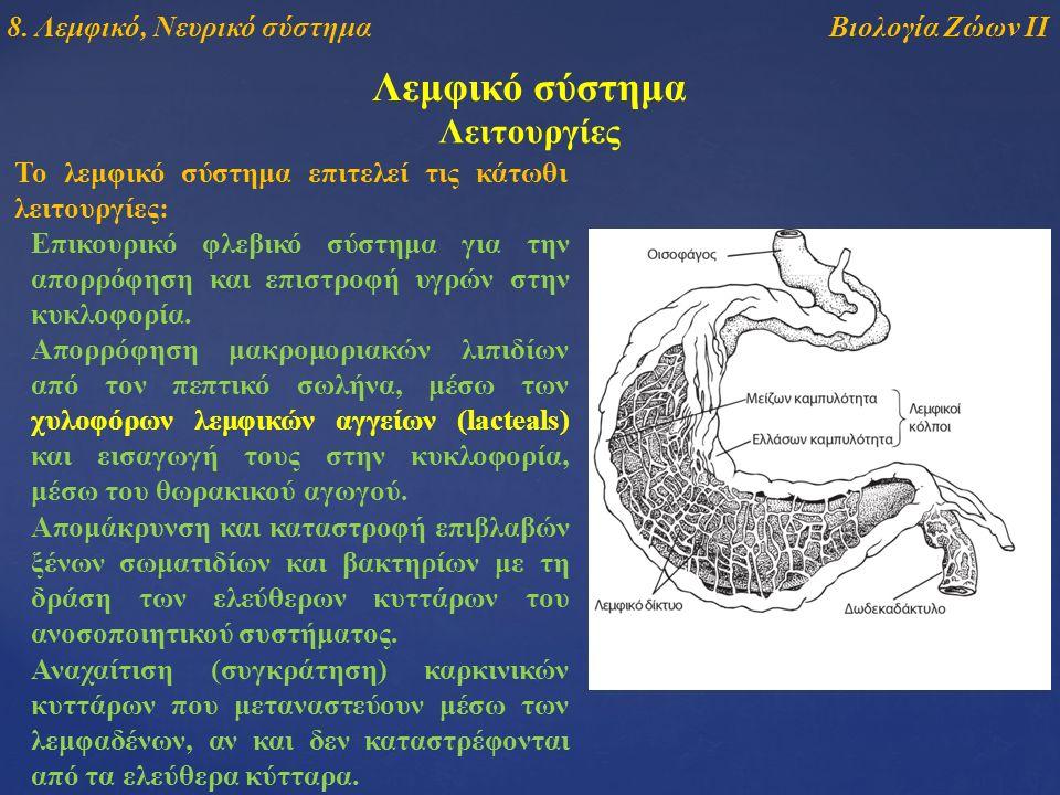 Λεμφικό σύστημα Το λεμφικό σύστημα επιτελεί τις κάτωθι λειτουργίες: Λειτουργίες Επικουρικό φλεβικό σύστημα για την απορρόφηση και επιστροφή υγρών στην