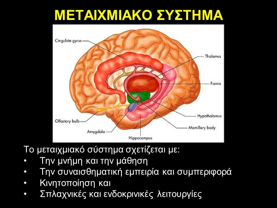 ΜΕΤΑΙΧΜΙΑΚΟ ΣΥΣΤΗΜΑ Το μεταιχμιακό σύστημα σχετίζεται με: Την μνήμη και την μάθηση Την συναισθηματική εμπειρία και συμπεριφορά Κινητοποίηση και Σπλαχν