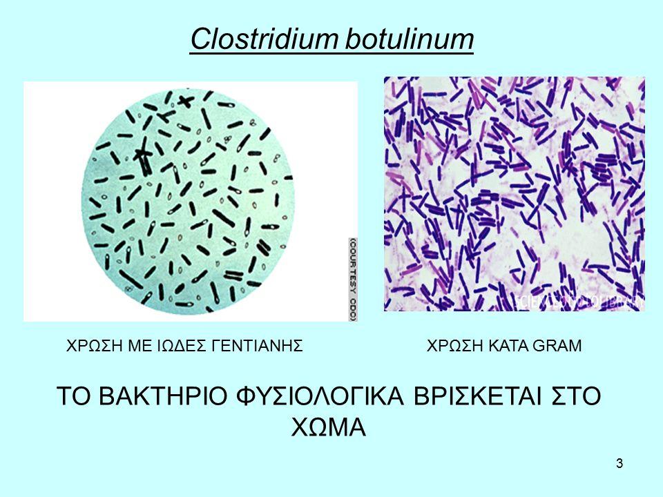 3 Clostridium botulinum ΧΡΩΣΗ ΜΕ ΙΩΔΕΣ ΓΕΝΤΙΑΝΗΣΧΡΩΣΗ ΚΑΤΑ GRAM ΤΟ ΒΑΚΤΗΡΙΟ ΦΥΣΙΟΛΟΓΙΚΑ ΒΡΙΣΚΕΤΑΙ ΣΤΟ ΧΩΜΑ