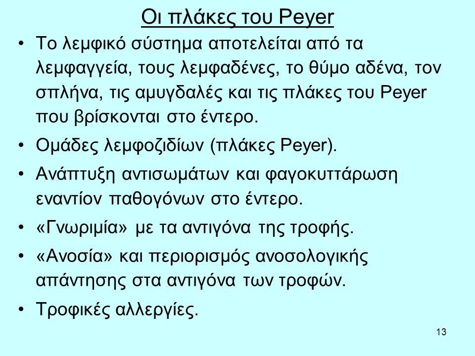 13 Οι πλάκες του Peyer Το λεμφικό σύστημα αποτελείται από τα λεμφαγγεία, τους λεμφαδένες, το θύμο αδένα, τον σπλήνα, τις αμυγδαλές και τις πλάκες του Ρeyer που βρίσκονται στο έντερο.