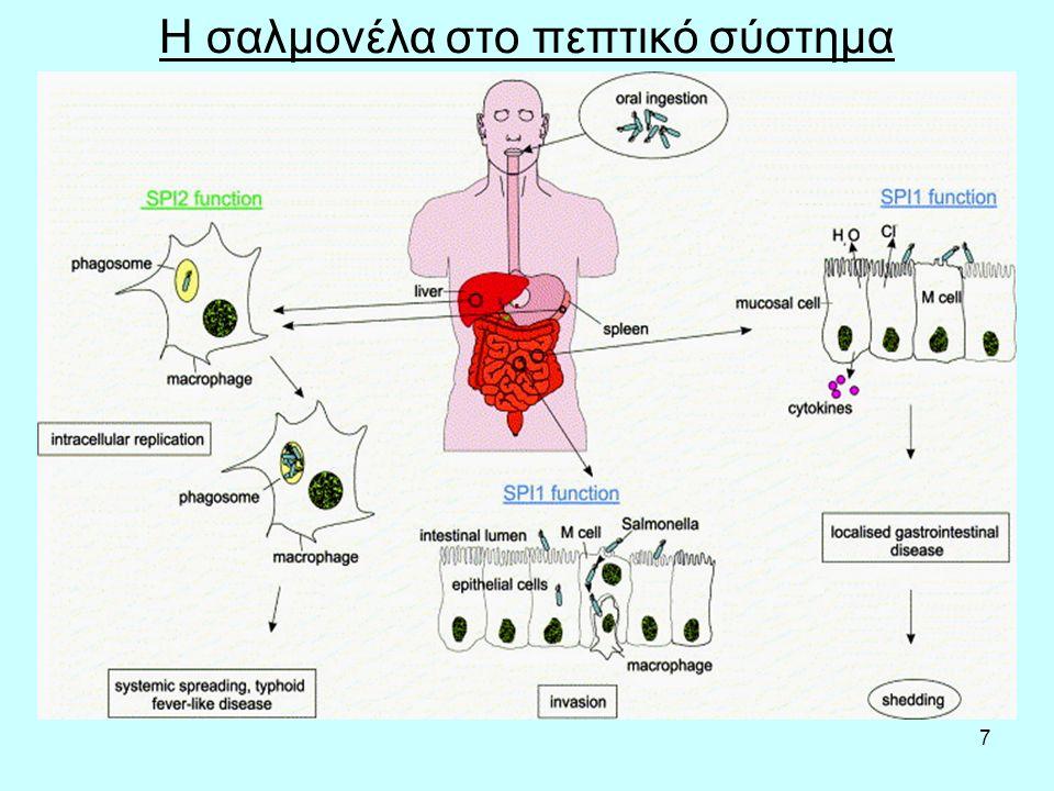 8 Τυφοειδής πυρετός Ο τυφοειδής πυρετός προκαλείται από ένα συγκεκριμένο τύπο βακτηριδίου σαλμονέλας, του Salmonella typhi, για τον οποίο τύπο ο άνθρωπος είναι αποκλειστικά η πηγή μολύνσεως.